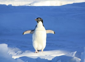 Time-Tracking Software for Linux: Solutions for Teams and Individuals