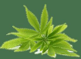 CBD derived phytocannabinoids from Entourage Nutritional