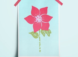 Clematis Flower Poster