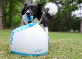 The Best Ball Thrower for Dogs