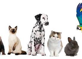 Maximise Pet Product Sales