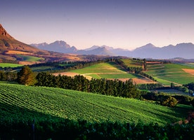 South Africa's Wine Country:  The Other Jewels in the Crown