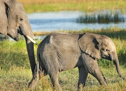 Top Four Tips To Help You Plan Your Next WildLife Safari