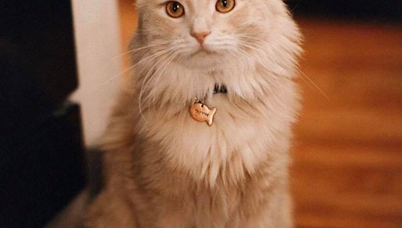 Fish shaped Cat ID tag
