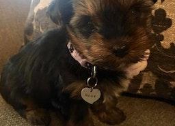 Custom small heart pet ID tag