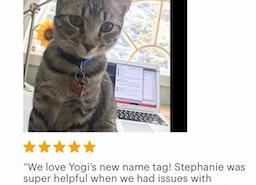Custom fish shaped cat ID tag