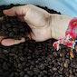 Gourmet Specialty Coffee from Ka`u