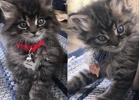 fish cat ID tags