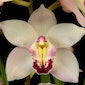 Three Magical Days of Orchid Beauty and Diversity Await You this Spring