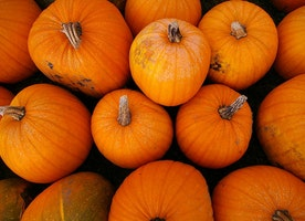 Carpinteria Invites You to Celebrate Fall and Take Home a Piece of Summer