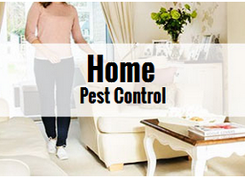 Tips to prevent bugs and pest from entering your home