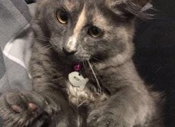 custom cat fish id tag