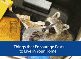 Things that attract pests in your Home