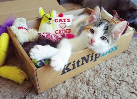 Curated Monthly Box of Toys and Treats for Cats!