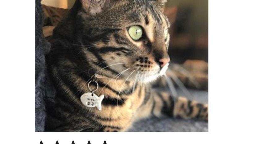 An Etsy Bestseller! custom cat id tag