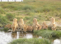 Tanzania, Best Wildlife Game Viewing Country in Africa.