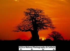 Sunrise, Tarangire National Park, Tanzania.