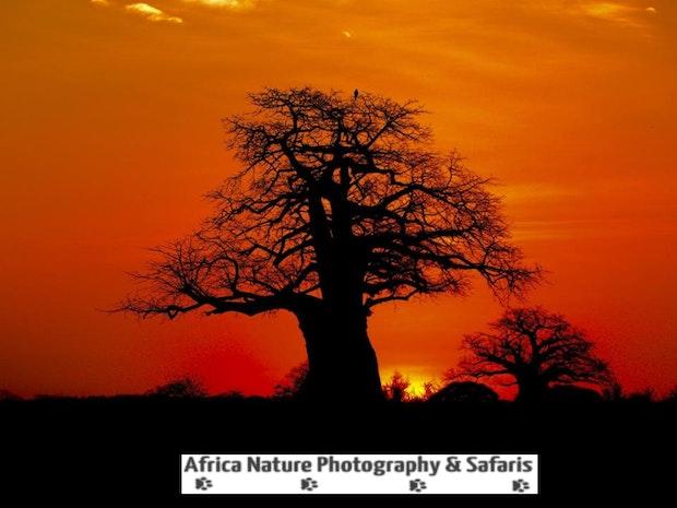 Sunrise, Tarangire National Park, Tanzania.