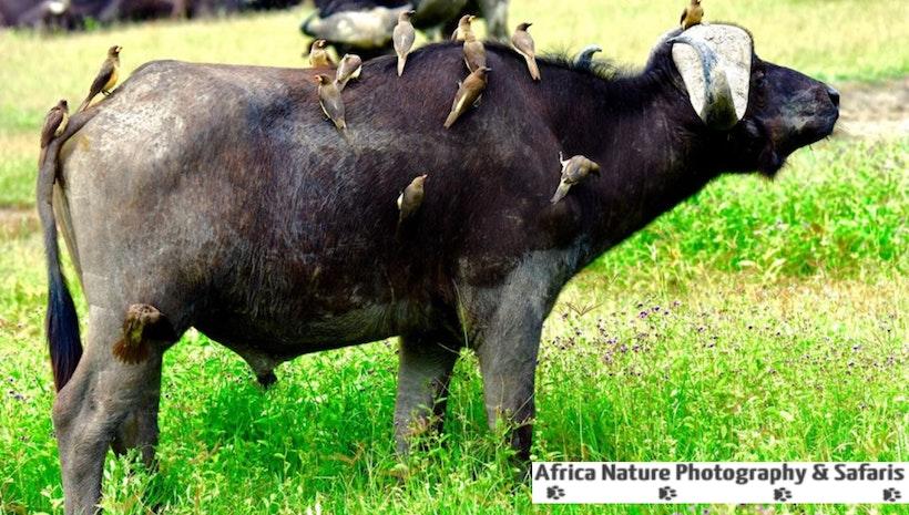 Tanzania Wildlife Tours and Safaris.