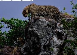 Tanzania Wildlife Photo Tours.