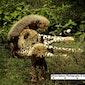 Best Wildlife Safari Adventures
