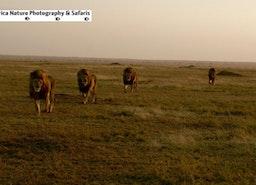 Tanzania Wildlife Tours.