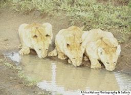 Safaris and Adventures, Tanzania