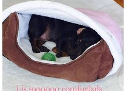 Give Extensive Comfort For Your Pet With Bedhug Burrow Blankets