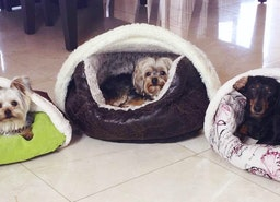 Give Extensive Comfort For Your Pet With Bedhug Dog Blanket