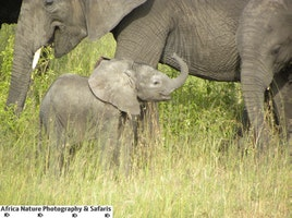 Tanzania Adventure Safaris.