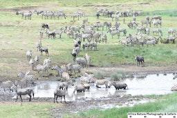 Discover Tanzania.