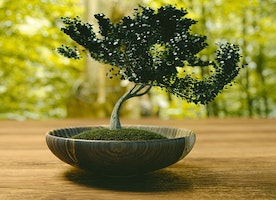 Bonsai Trees are Perfect for Home Decor