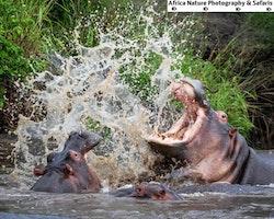 Best Tanzania Adventures