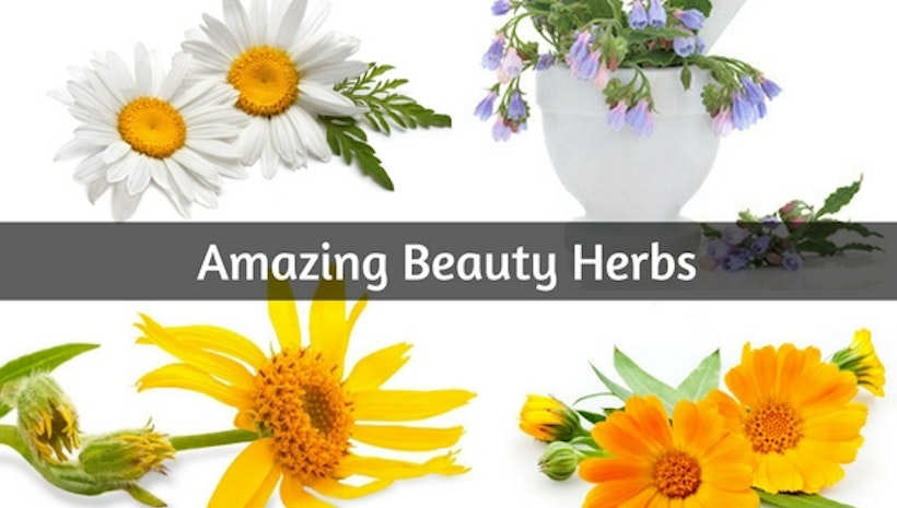 Amazing Beauty Herbs For Curing Every Skin Problems!