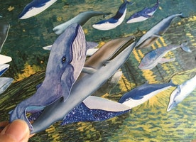 30 blue whale embellishment paper cards big fish blue whale illustrations card fish world deep blue fish decor paper mixed media art gift