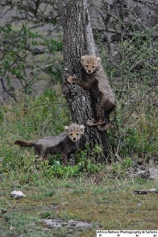 Tanzania Safari Packages.