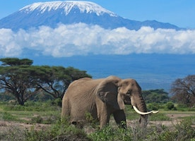 Why a Tanzania Safari Should be on Your Bucket List