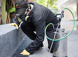 Bed Bug Exterminator for hire near my location