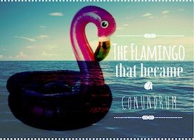 The flamingo that became a conundrum.