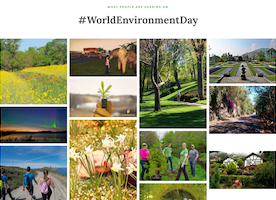 Check out what we're doing for the UN on #WorldEnvironmentDay