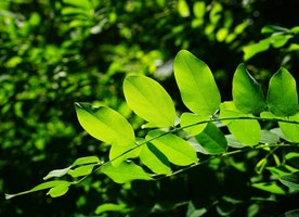 Chlorophyll: 5 Reasons Why It's Good For You