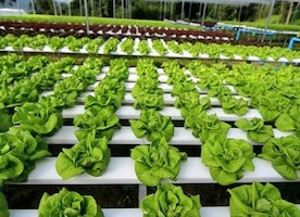 Tips For Great Hydroponics Gardening