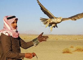 What Languages Are Spoken In Saudi Arabia?