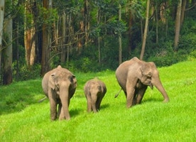 The Day With Main Attraction Of Munnar-Eravikulam National park