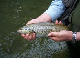 3 Methods for trout fishing effectively