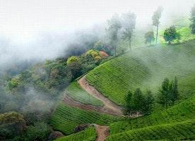 The Stunning Munnar Hills