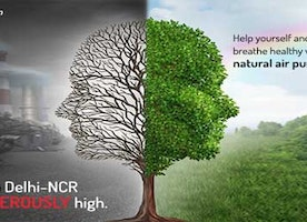 Stop Breathing Poison! Breathe healthy with NASA recommended natural Air Purifying Plants.