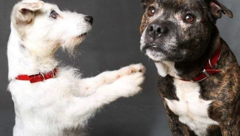 This Canine Connection Will Make Your Day