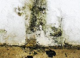 best mold remediation nj