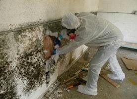 Best Mold Inspection NJ